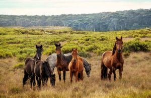 groupe de chevaux