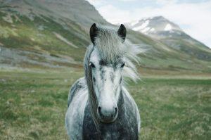 cheval dans la montagne