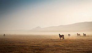 chevaux dans le désert