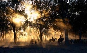 cowboys et chevaux